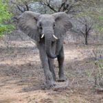 Тиффани представляет новую коллекцию «Save the Wild»